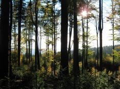 Okolí Čerchova vyniká úspěšným odchovem tetřeva hlušce, který zde nachází výborné podmínky proživot.