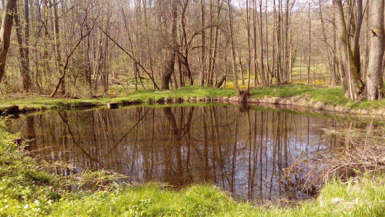 Bystřice - rybník